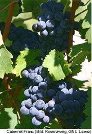 Wein Paris Champangne